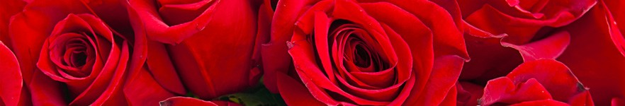 Organic Rose Toner